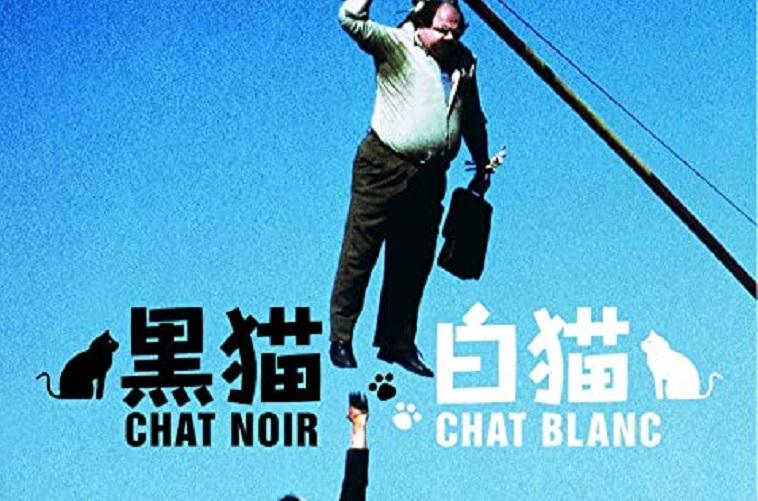 【ネタバレなし】映画「黒猫白猫」の魅力は?あらすじ・感想・評判を紹介